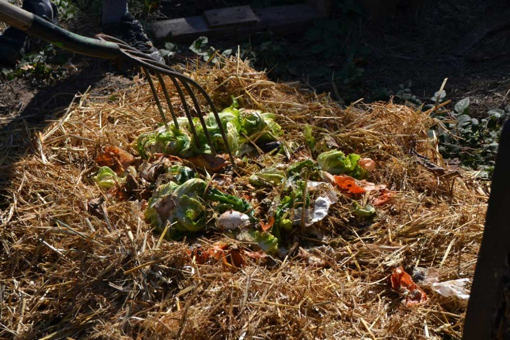 Discarded produce can be added to the layered mixture to increase the decomposition process, which creates better compost. Photo by Matthew Tsuda.