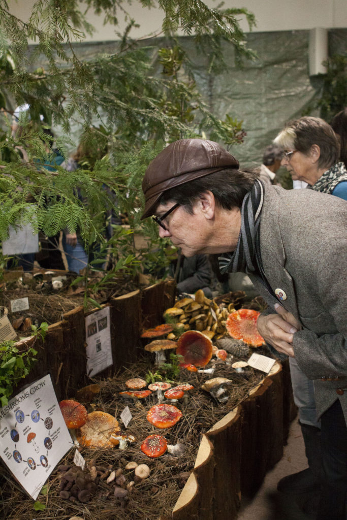 Santa Cruz locals, UCSC students and visitors came to the Louden Nelson Community Center this past weekend to participate in the 42nd annual Fungus Fair. Photo by Ali Enright