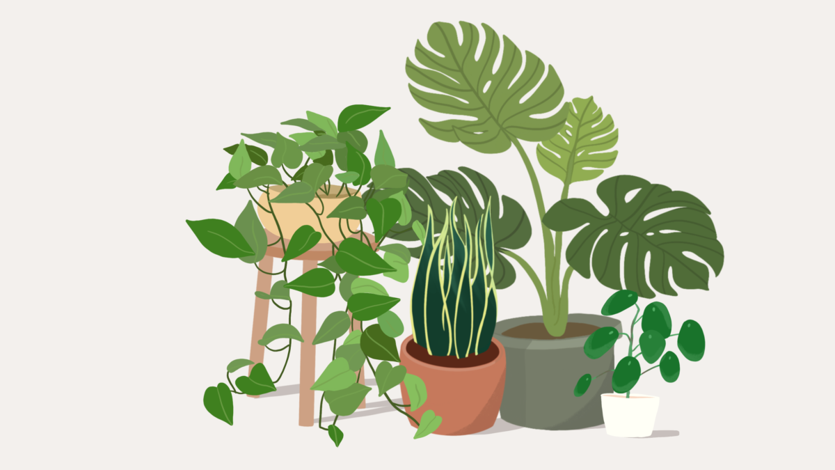 From One Plant Parent To Another…