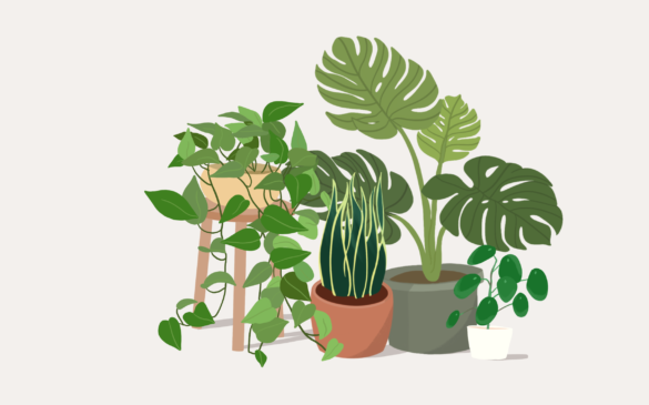 An illustration of an assortment of plants.