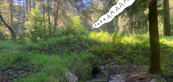"Photo of a green, sunny forest with a speech bubble reading ""AAAAAA"""